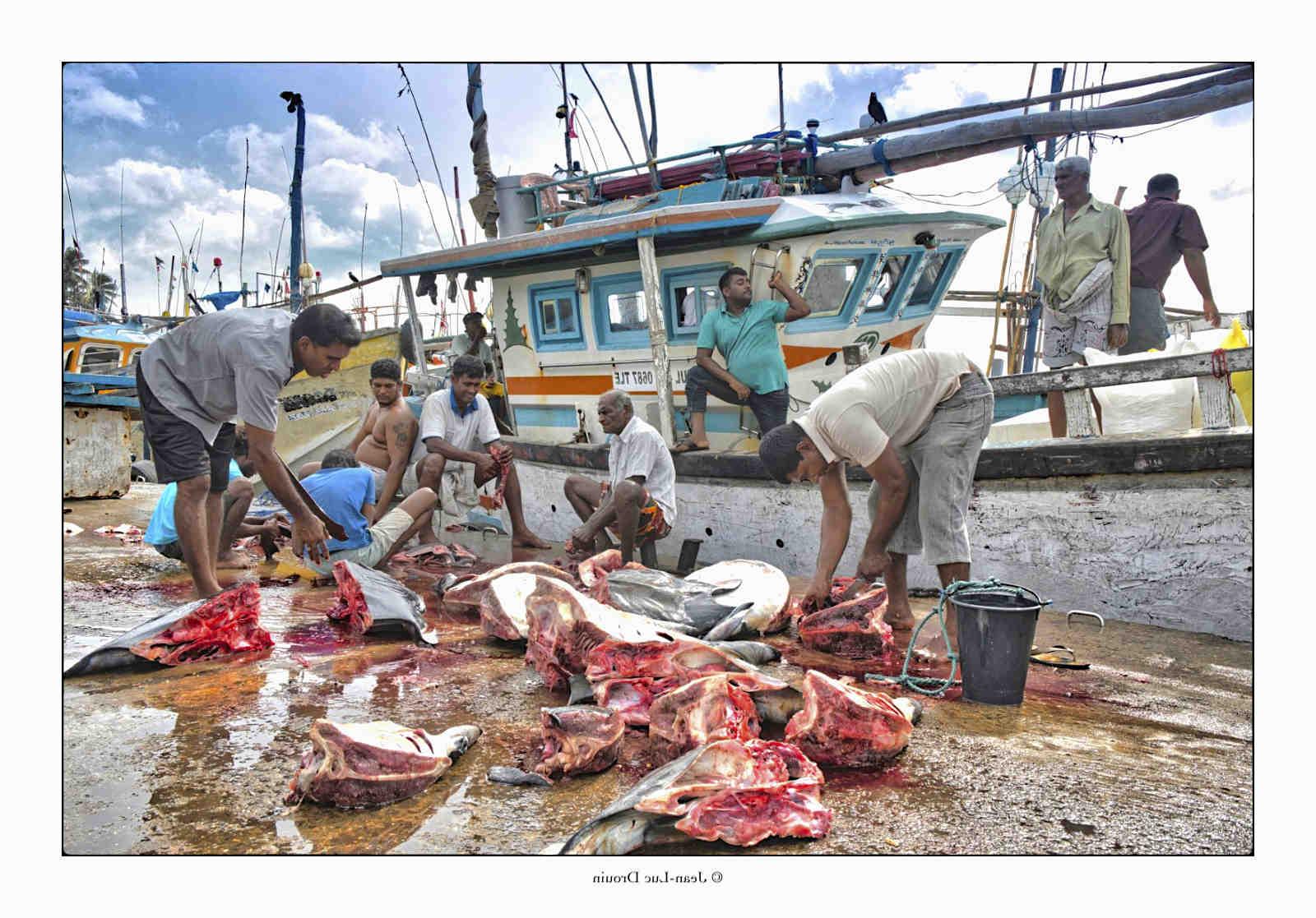 Comment fonctionnent les filets de pêche?